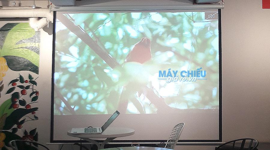 Hình ảnh chiếu sắc nét của Optoma PS368 trên màn 100 inch