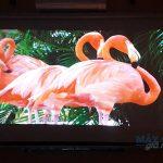 Máy chiếu gia đình Full HD 1080p trọn gói chỉ từ 18 triệu đồng